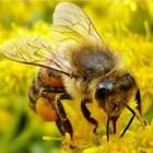 Bijensterfte en oorzaken