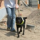 Geen wetgeving inzake het toelaten van assistentiehonden