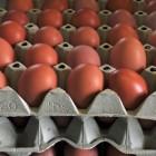 Fipronil in eieren: hoe schadelijk is het?