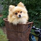 Geval van hondsdolheid ontdekt in Nederland